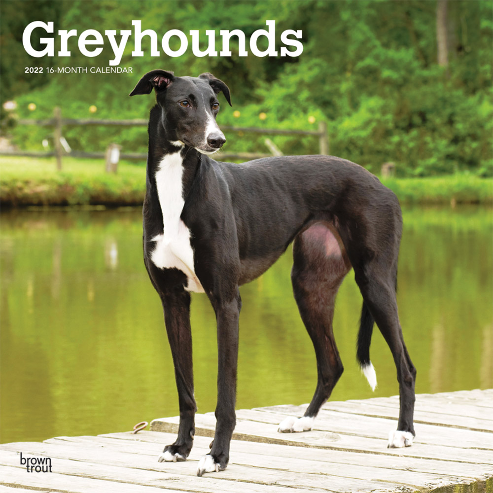 Greyhounds 2022 12 x 12 Inch Monthly Square Wall Calendar, Animals Dog Breeds DogDays