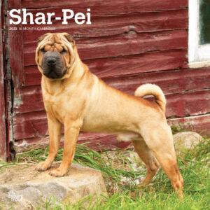 Shar Pei 2022 12 x 12 Inch Monthly Square Wall Calendar, Animals Dog Breeds DogDays