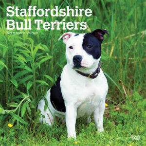 Staffordshire Bull Terriers 2022 12 x 12 Inch Monthly Square Wall Calendar, Animals Dog Breeds DogDays