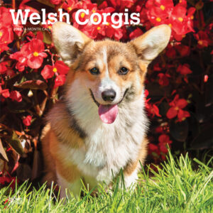 Welsh Corgis 2022 12 x 12 Inch Monthly Square Wall Calendar, Animals Dog Breeds DogDays