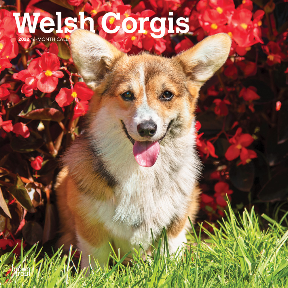 Welsh Corgis 2022 12 x 12 Inch Monthly Square Wall Calendar, Animals Dog Breeds DogDays