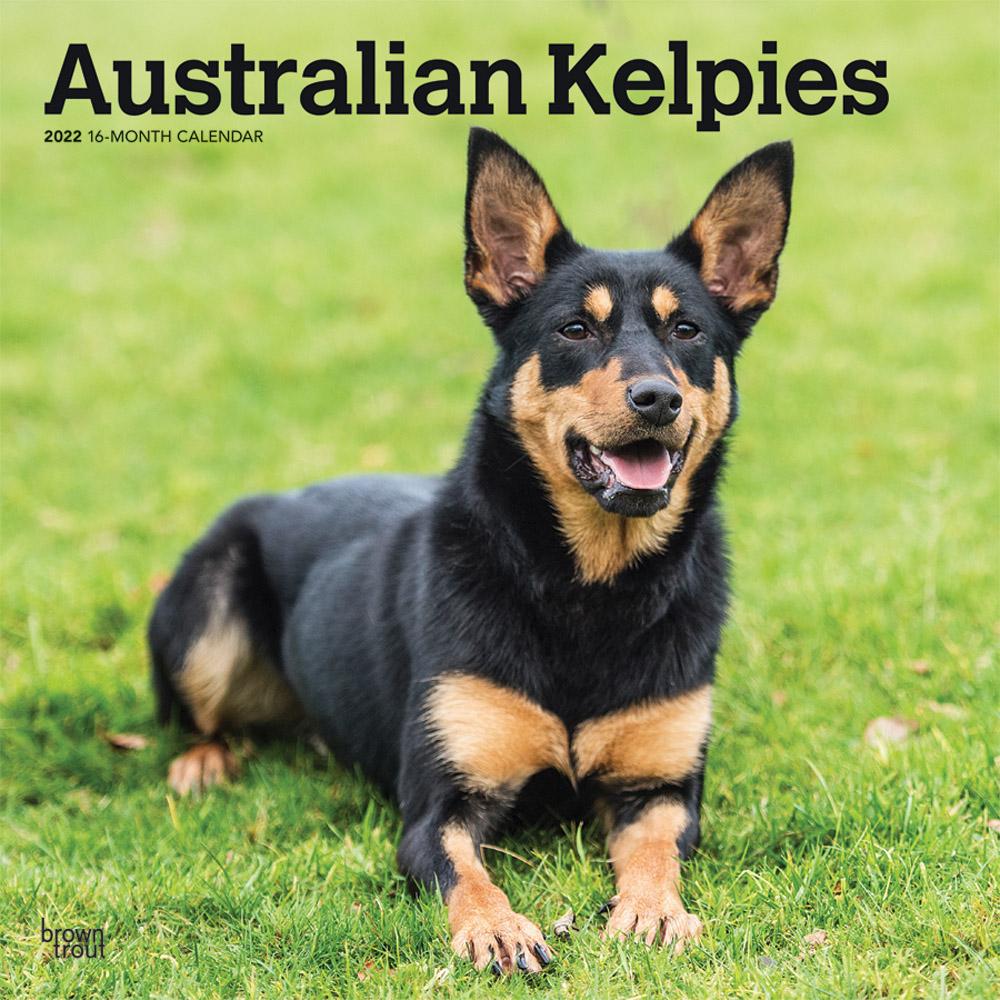 Australian Kelpies 2022 12 x 12 Inch Monthly Square Wall Calendar, Animal Dog Breeds DogDays
