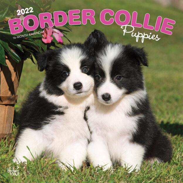 Border Collie Puppies 2022 12 x 12 Inch Monthly Square Wall Calendar, Animals Dog Breeds Collie Puppy DogDays