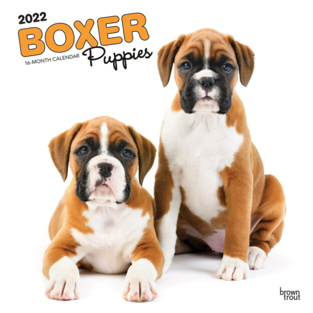 Boxer Puppies 2022 12 x 12 Inch Monthly Square Wall Calendar, Animals Dog Breeds Puppy DogDays