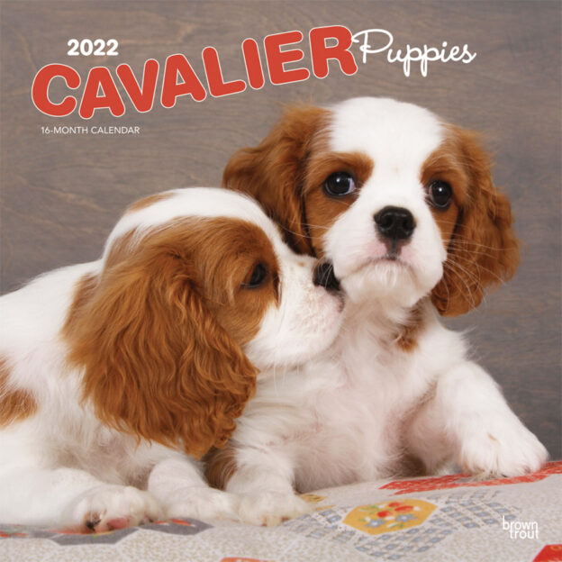 Cavalier King Charles Spaniel Puppies 2022 12 x 12 Inch Monthly Square Wall Calendar, Animals Dog Breeds Puppy DogDays