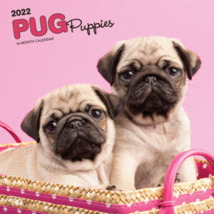 Pug Puppies 2022 12 x 12 Inch Monthly Square Wall Calendar, Animals Dog Breeds Puppy DogDays