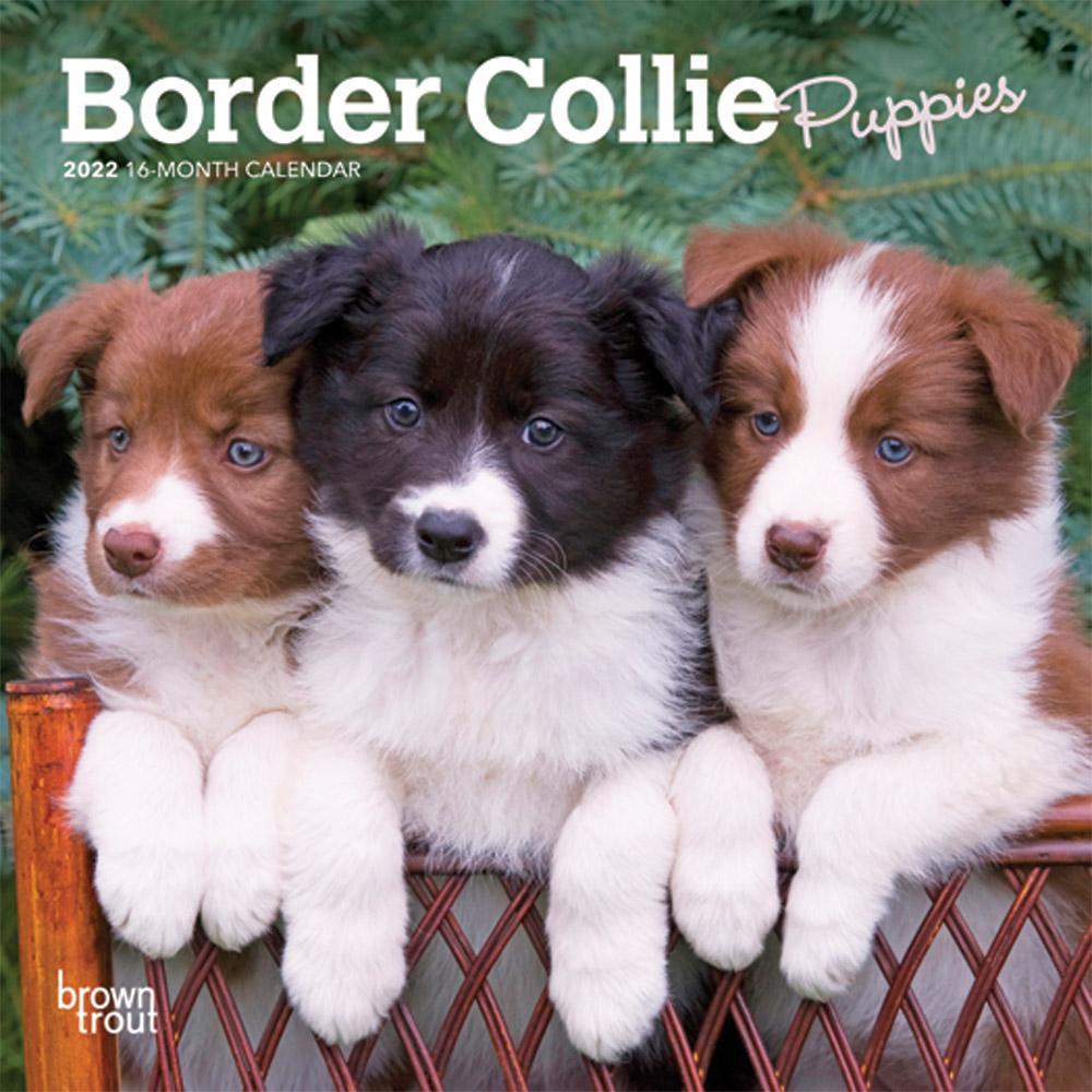 Border Collie Puppies 2022 7 x 7 Inch Monthly Mini Wall Calendar, Animals Dog Breeds Puppy DogDays