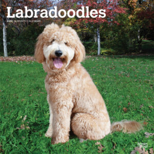 Labradoodles 2022 12 x 12 Inch Monthly Square Wall Calendar, Animals Mixed Dog Breeds DogDays