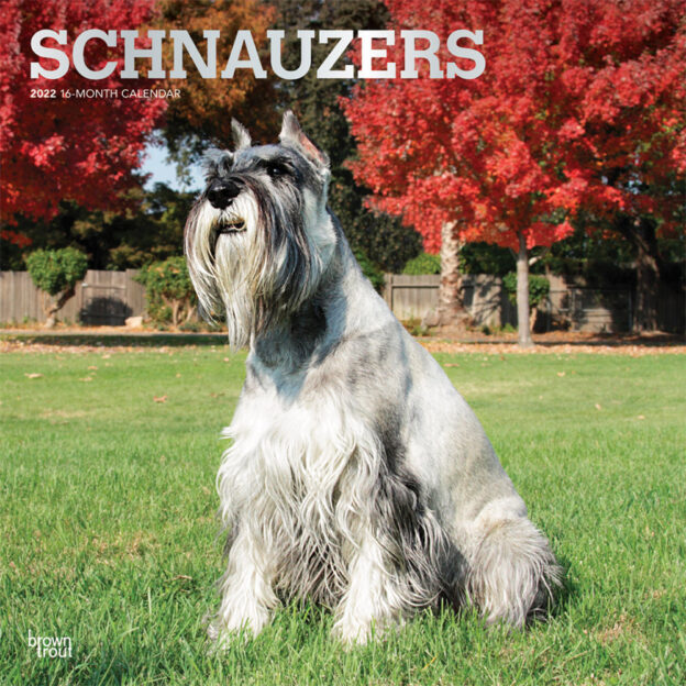 Schnauzers 2022 12 x 12 Inch Monthly Square Wall Calendar with Foil Stamped Cover, Animals Dog Breeds DogDays
