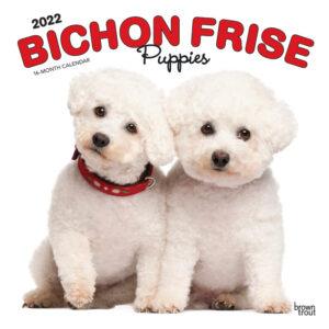 Bichon Frise Puppies 2022 12 x 12 Inch Monthly Square Wall Calendar, Animals Dog Breeds Puppy DogDays