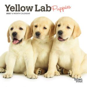 Yellow Labrador Retriever Puppies 2022 7 x 7 Inch Monthly Mini Wall Calendar, Animals Dog Breeds Puppy DogDays