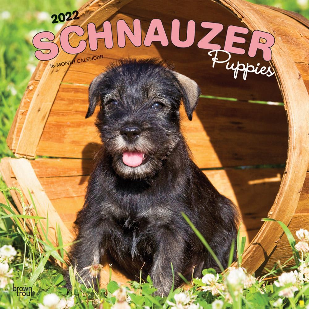 Schnauzer Puppies 2022 12 x 12 Inch Monthly Square Wall Calendar, Animals Dog Breeds Puppy DogDays