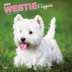 West Highland White Terrier Puppies 2022 12 x 12 Inch Monthly Square Wall Calendar, Animals Dog Breeds Puppy DogDays